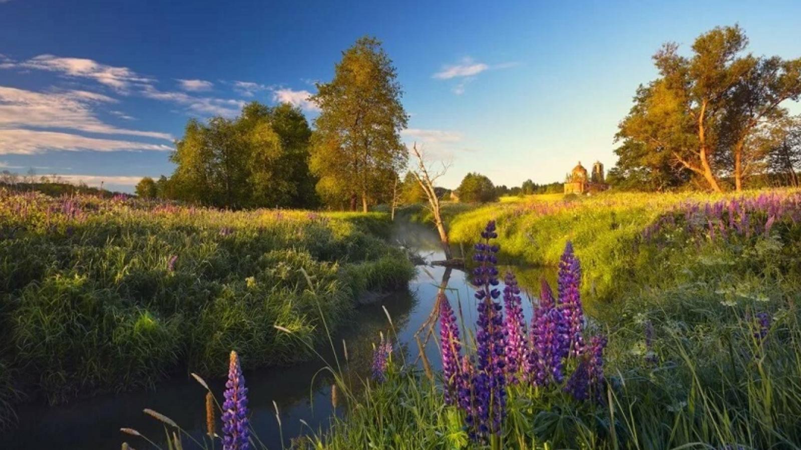 Летний праздник «что такое это лето?» для детей среднего и старшего дошкольного возраста