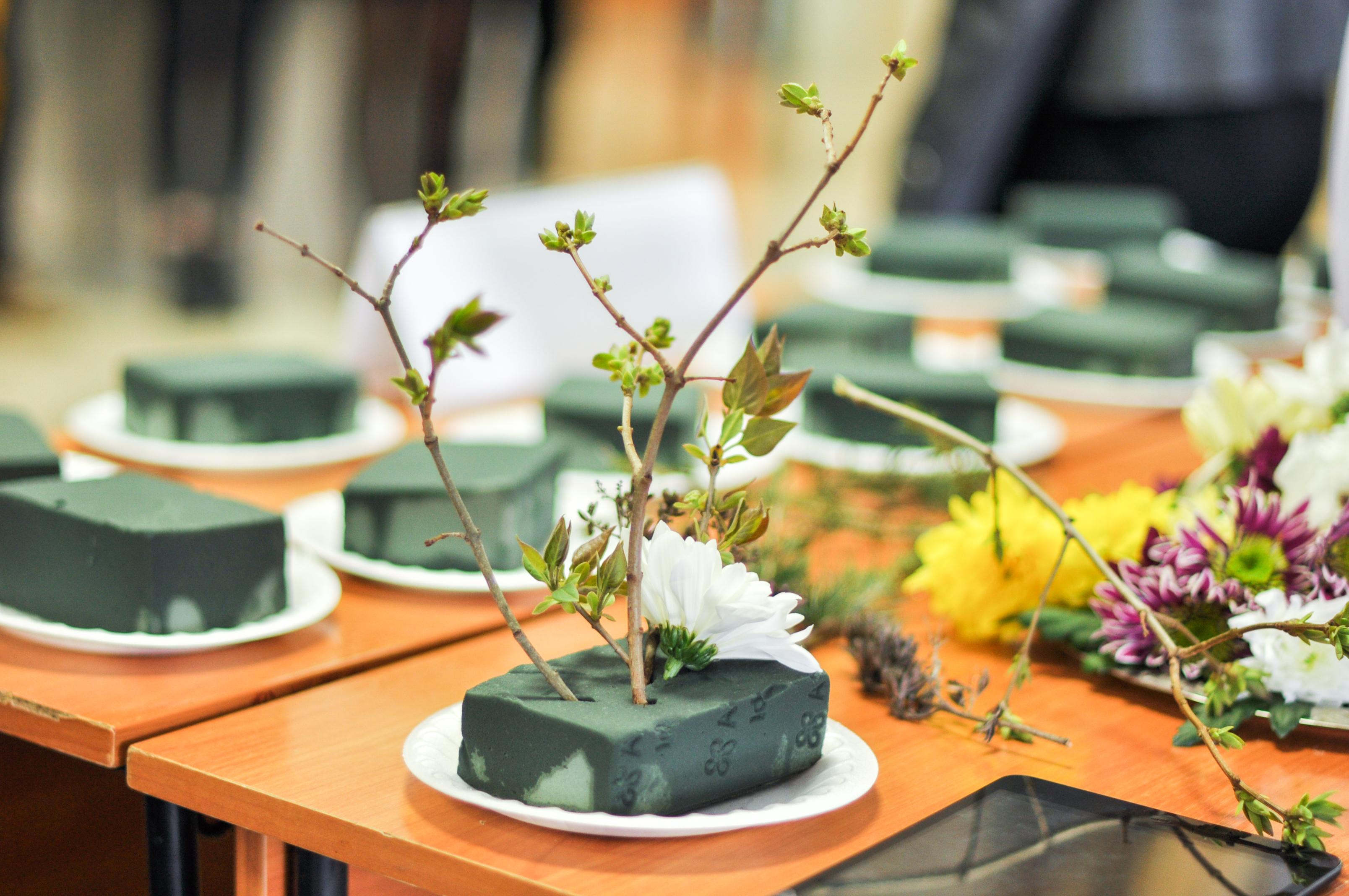 Икебана - необходимые материалы и инструменты для создания красивой икебаны (110 фото)