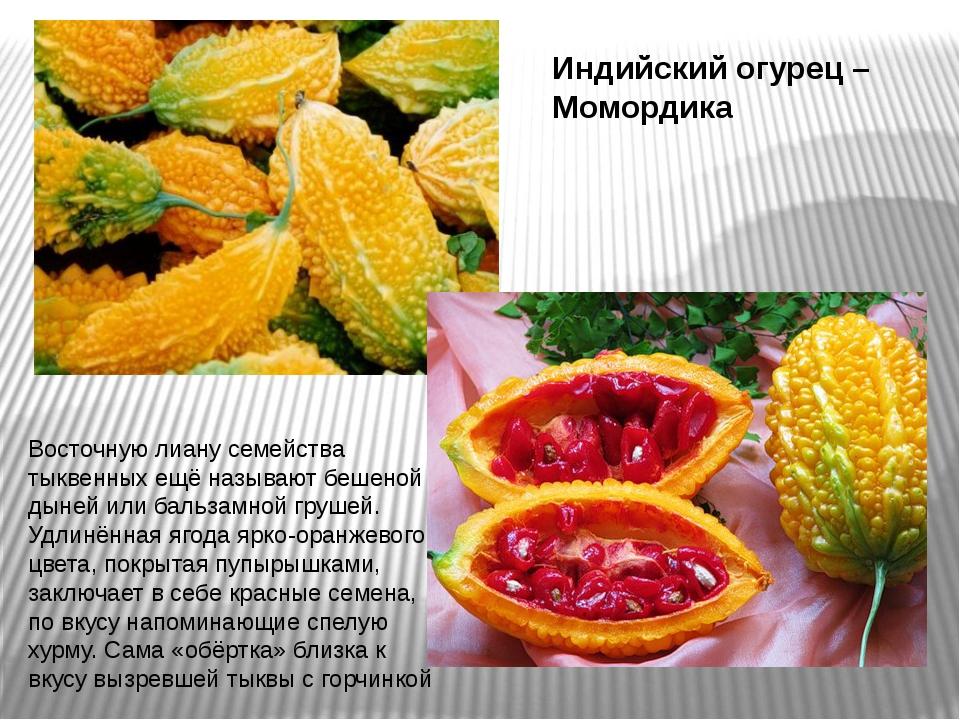 Момордика: что это за растение, фото, пригодность, какая на вкус, как употреблять в пищу, лечебные свойства