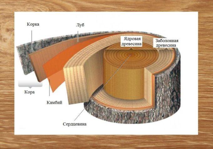 Различные породы древесины, их свойства и применение