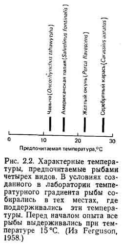 Гомойотермные организмы. теплокровные животные. пойкилотермные организмы