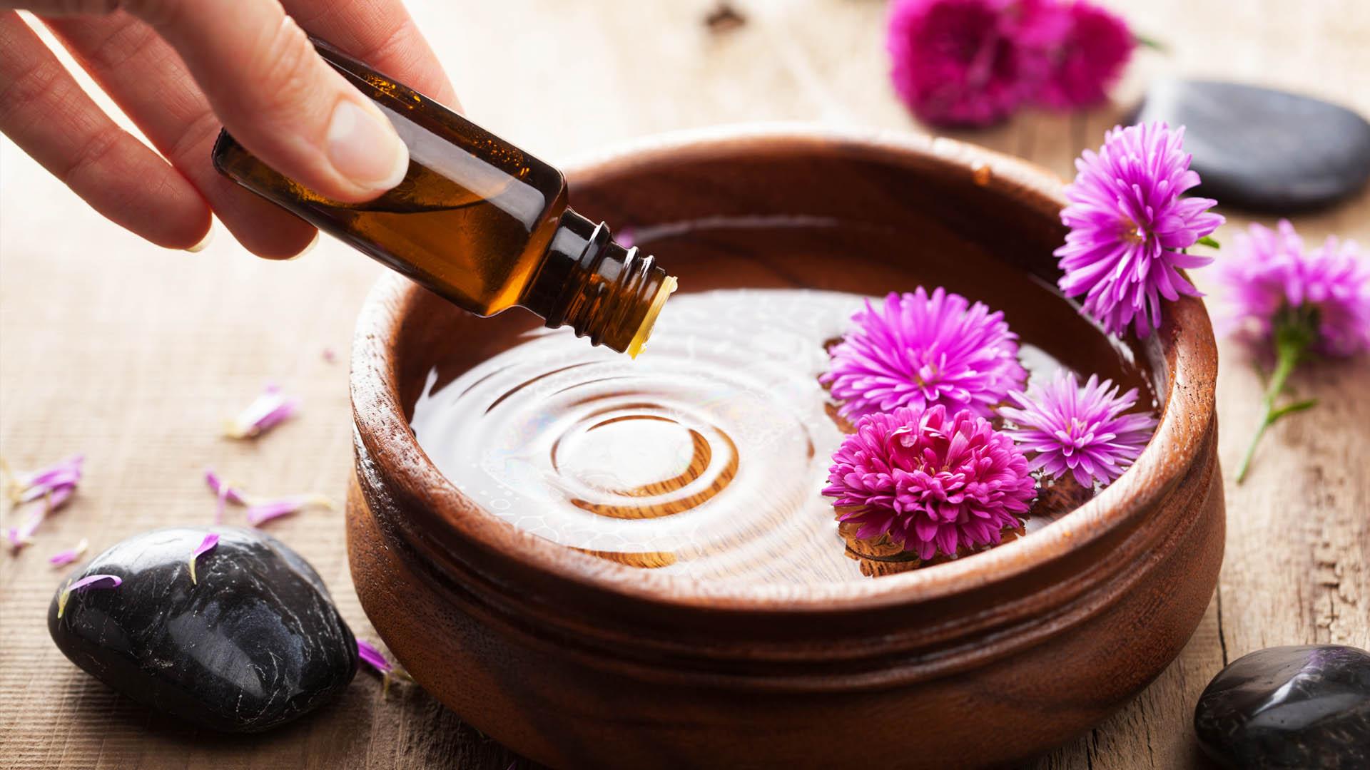Жожоба — лечебные свойства, применение и рецепты