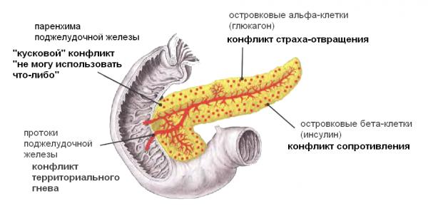 Что такое диффузные изменения печени и поджелудочной железы