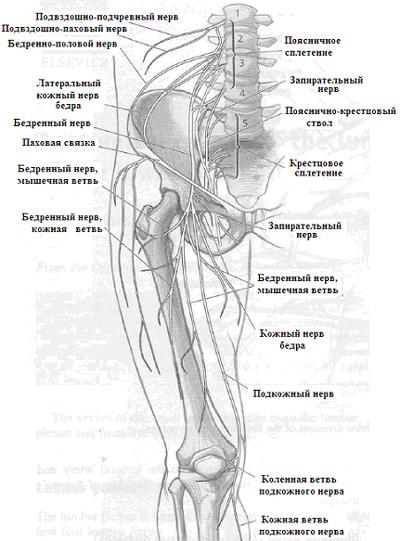 Что такое тройничный нерв и где находится? воспаление тройничного нерва: симптомы и лечение