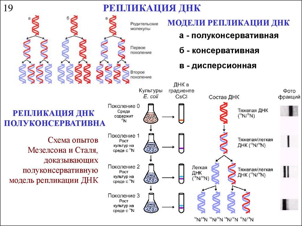 Репликация - это что? :: syl.ru