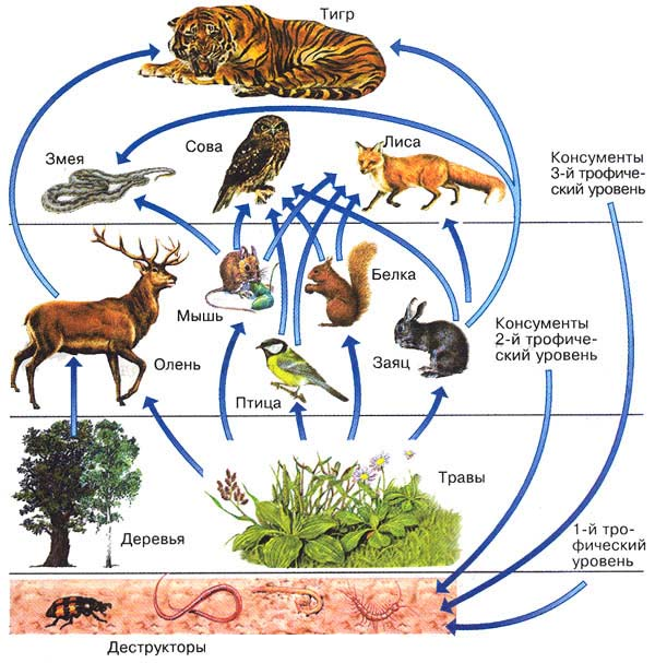 Экосистема (биогеоценоз), ее компоненты / справочник :: бингоскул