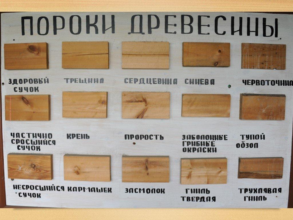 Заболонь – это основной слой древесины : labuda.blog заболонь – это основной слой древесины — «лабуда» информационно-развлекательный интернет журнал