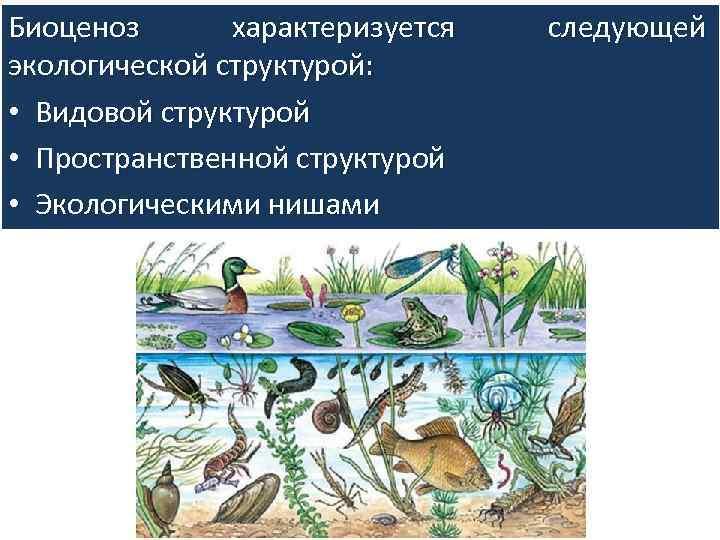 Биоценоз — википедия с видео // wiki 2