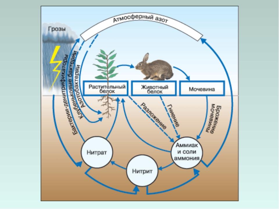 Круговорот веществ в биосфере, геологический и биохимический виды, значение живых организмов