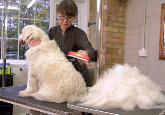 Фурминатор для собак (крупных и мелких прод), как его выбрать и использовать, для чего нужна эта чесалка