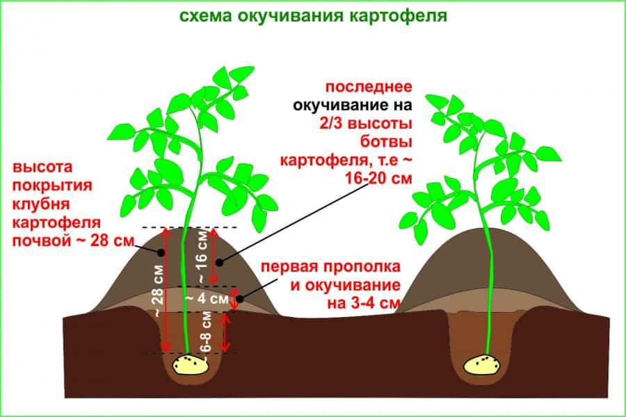 Как сделать компост и как его применять на участке