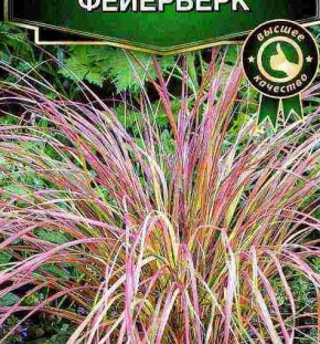 Растение ковыль степной: лекарственные свойства