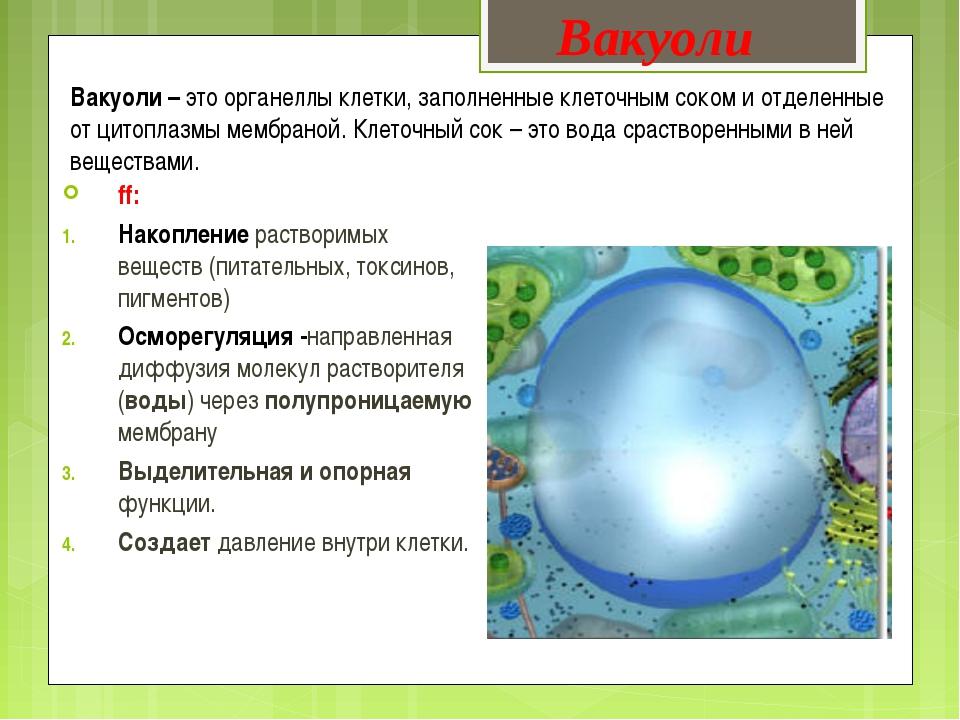 Вакуоль: краткая характеристика и функции в клетках растений — природа мира