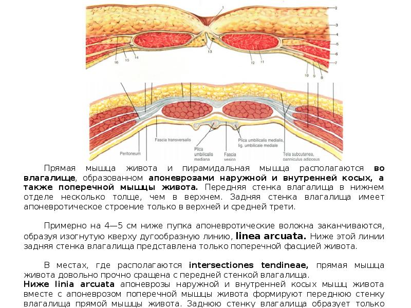 Что такое апоневроз и как его лечить