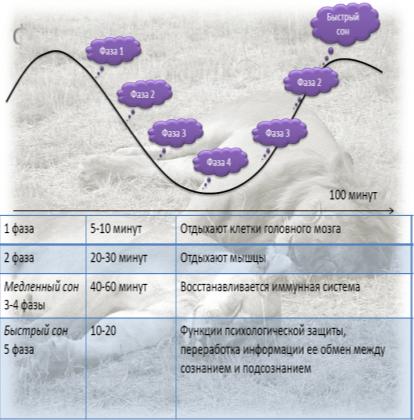 Фаза глубокого сна: сколько длится и как увеличить до нормы