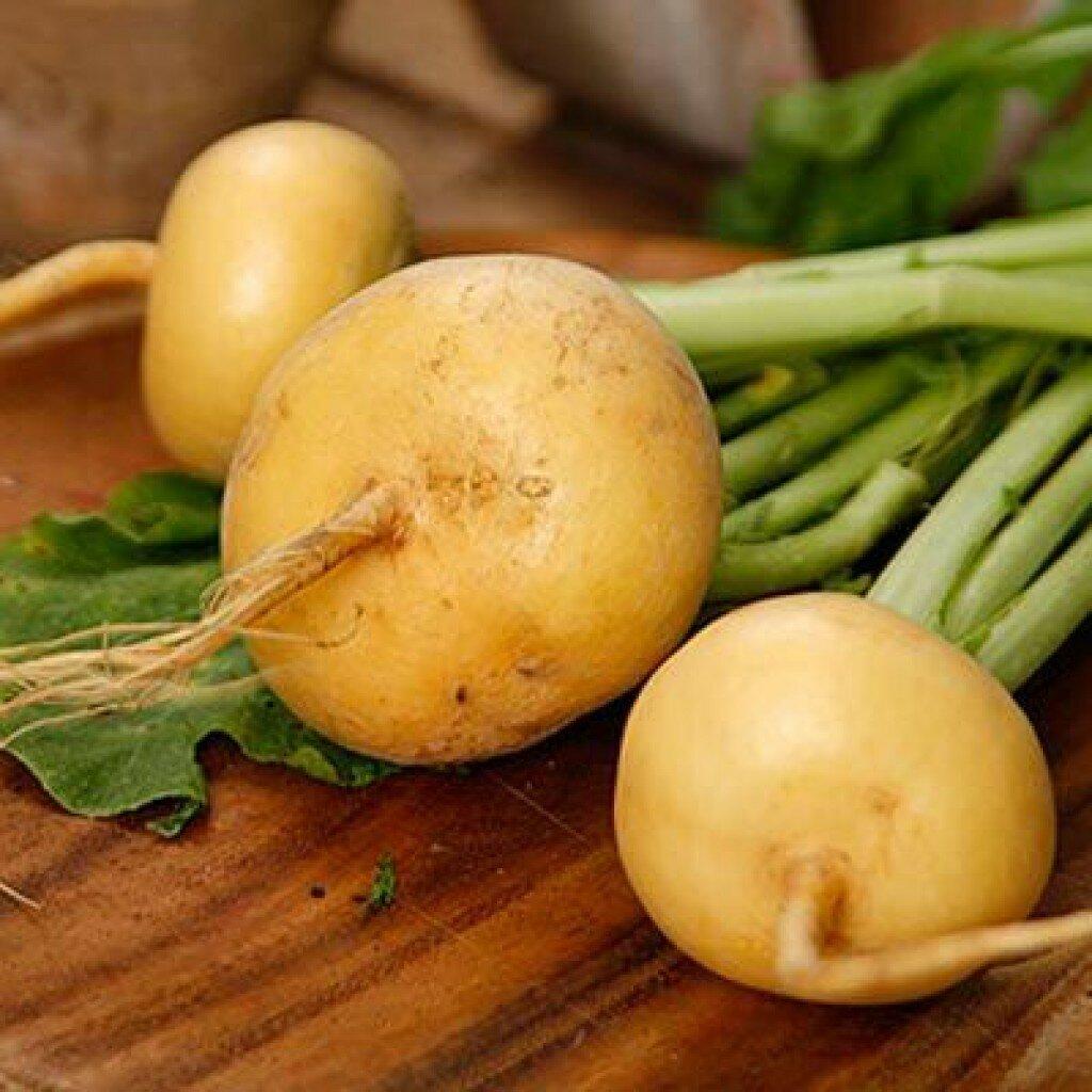Турнепс (семена турнепса) — описание, целебные свойства, применение