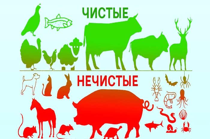 Кошерные продукты: что это? можно ли православным кошерную еду