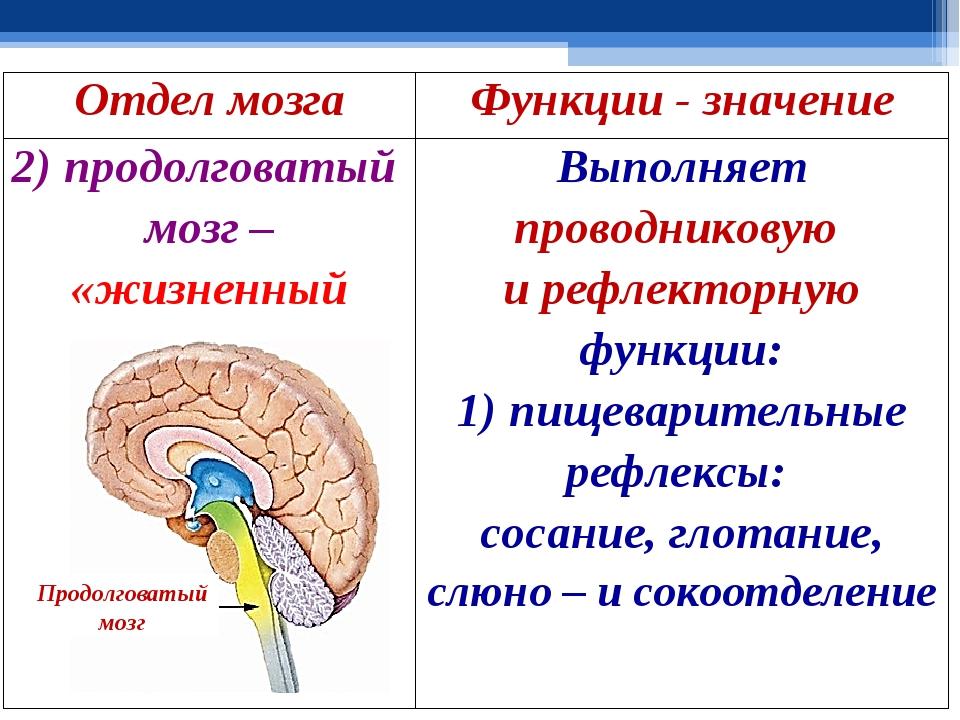 Что такое рептильный мозг и как он работает?