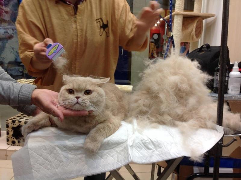 Что такое чесалка фурминатор и где его приобрести для длинношерстных кошек