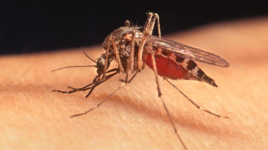 Что такое малярия. фото