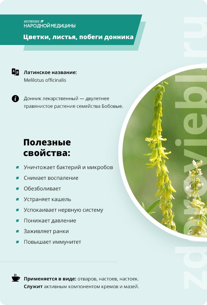 Дурман-трава: фото и описание, свойства, противопоказания - sadovnikam.ru