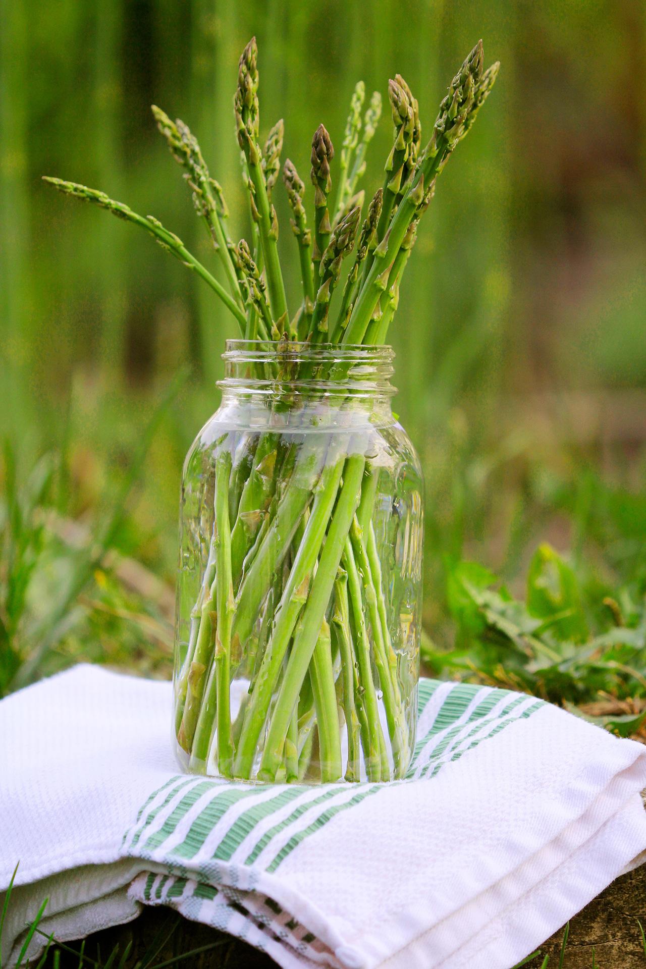 Что такое спаржа, чем она полезна? особенности выращивания растения