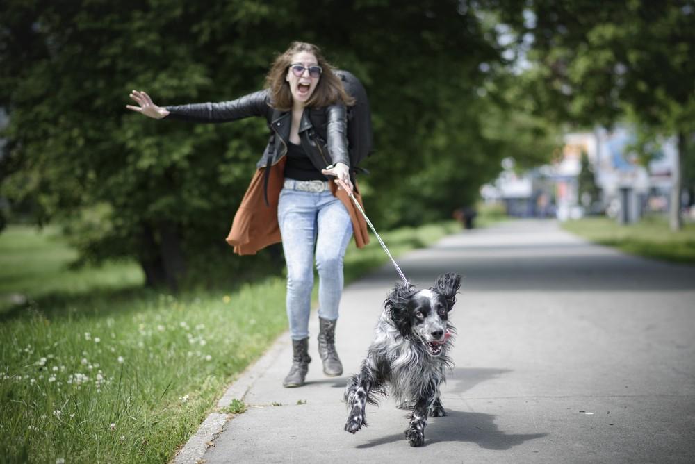 Как понять, что у собаки закончилась течка: физиологические и поведенческие признаки