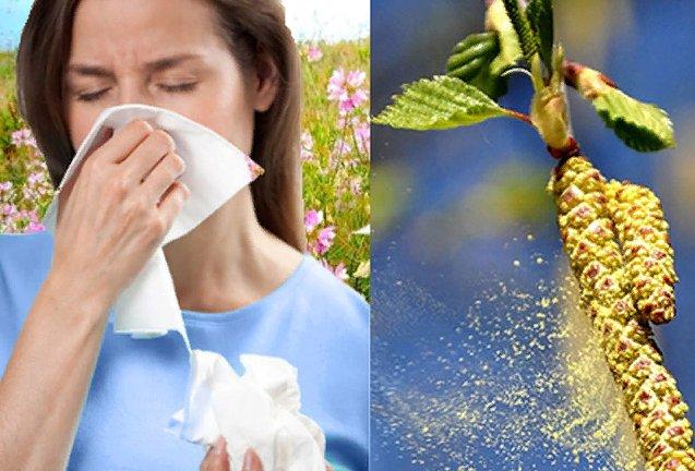 Аллергия - поллиноз что это?