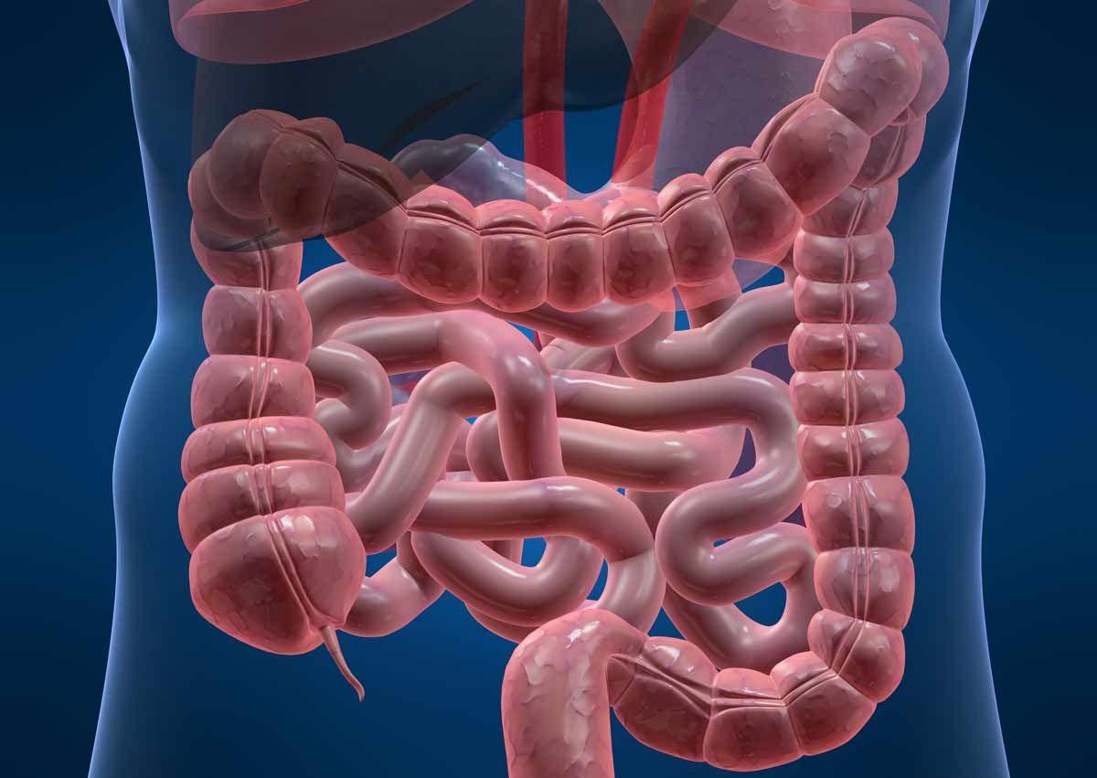 Дистальный отдел кишечника что такое - твой кишечник