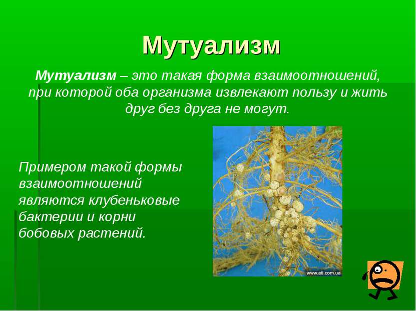 Типы мутуалистических отношений ? естественные науки