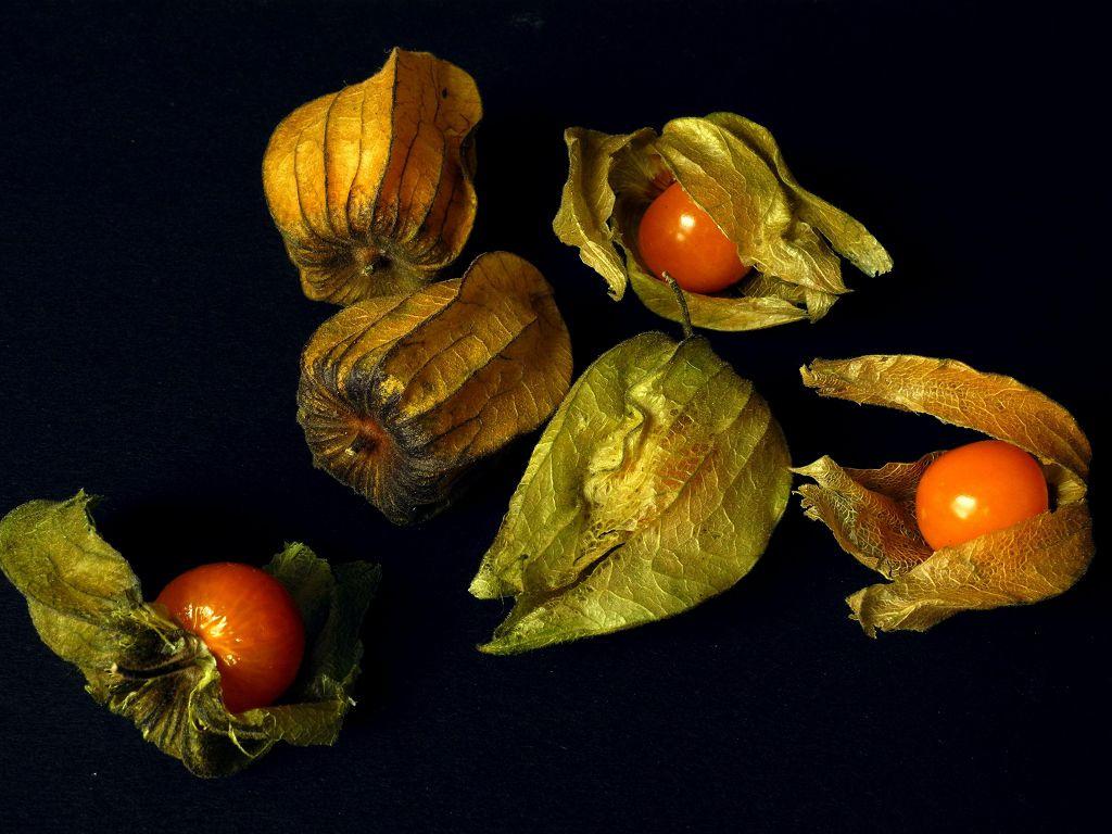 Физалис – выращивание, посадка и уход, сорта и приготовление блюд из овощного физалиса