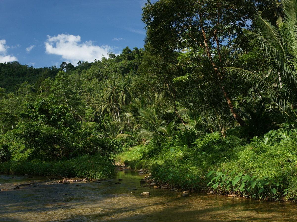 Джунгли — википедия. что такое джунгли