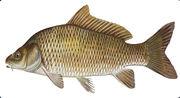 Значение слова «рыба» в 10 онлайн словарях даль, ожегов, ефремова и др. - glosum.ru