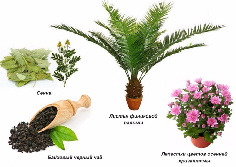 Александрийский лист для похудения - полезные свойства и отзывы