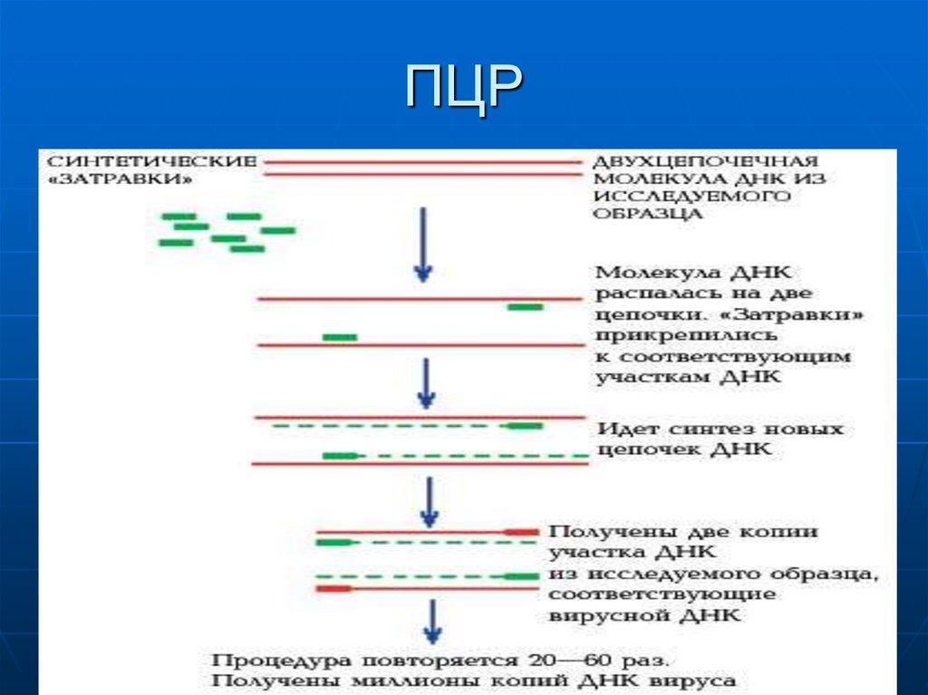 Пцр на иппп: что это за анализ, как проводится диагностика и что входит в комплекс обследования на половые инфекции