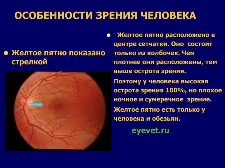Острота зрения. системы и правила определения остроты зрения