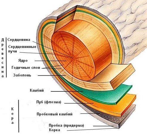 Породы древесины, их свойства и пороки