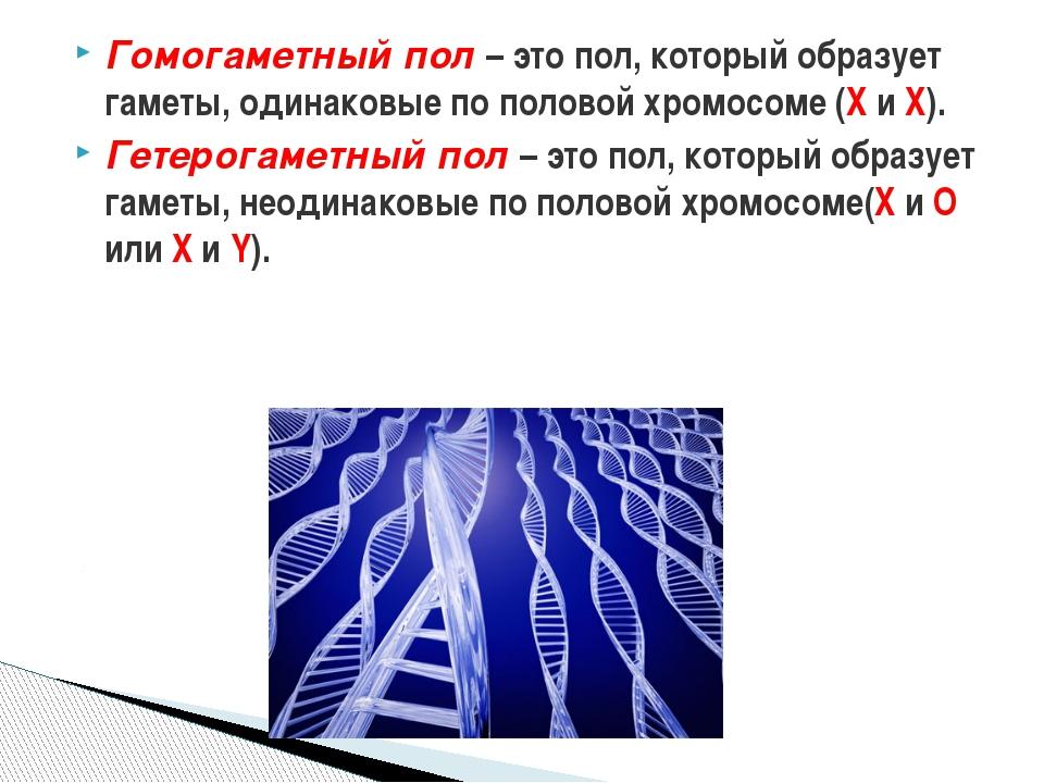 Генетика пола: сцепленное наследование