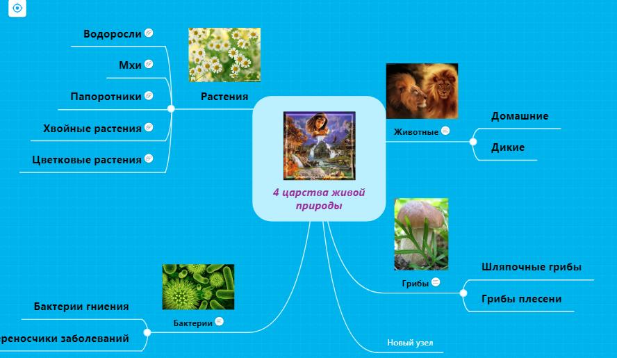 Взаимосвязь объектов живой и неживой природы - примеры, схема и фото — природа мира