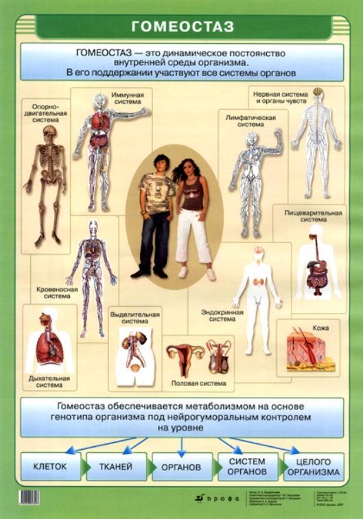 Гомеостаз: процесс, функции, роль, механизмы, примеры, что это в биологии, экологии и психологии, нарушение, уровни, изменения