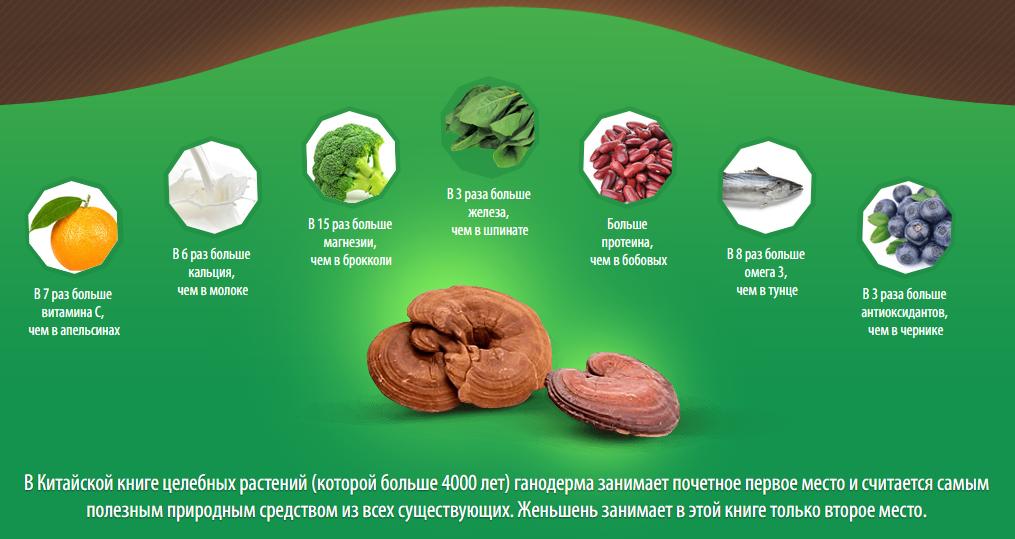 Гриб рейши – лечебные, полезные свойства и противопоказания