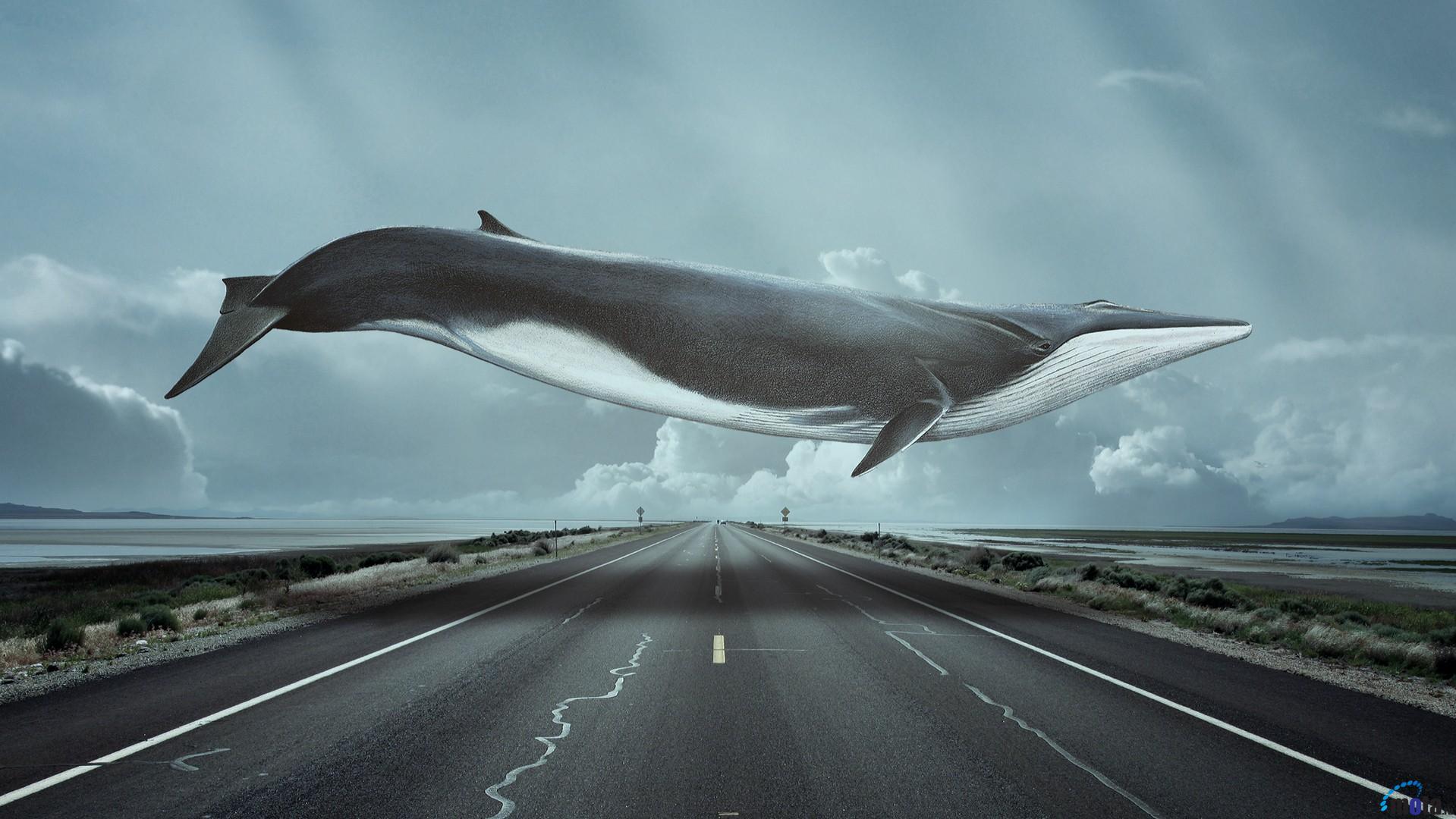 Синий кит - самое большое современное животное - zefirka