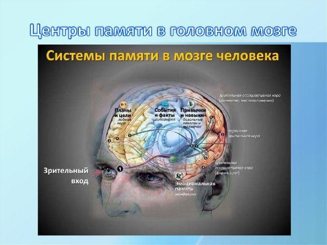 Влияние физической культуры на здоровье человека