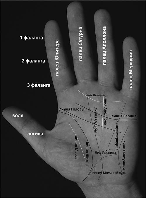 Руки известных людей, хиромантия, особые знаки | узнай свою судьбу