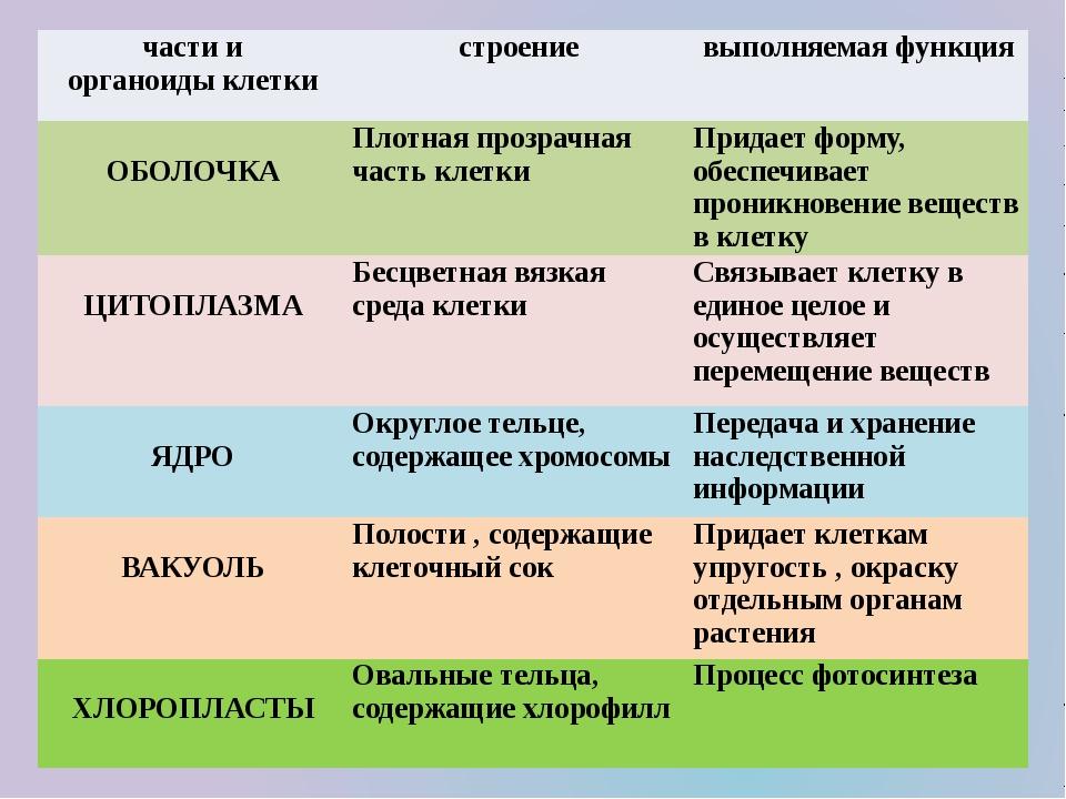 Органоиды клетки | строение, функции, виды (таблица)