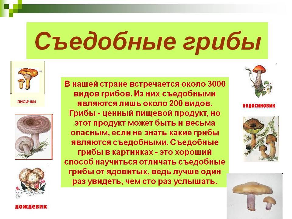 Что такое грибы? классификация (с пояснениями). виды грибов. много фото