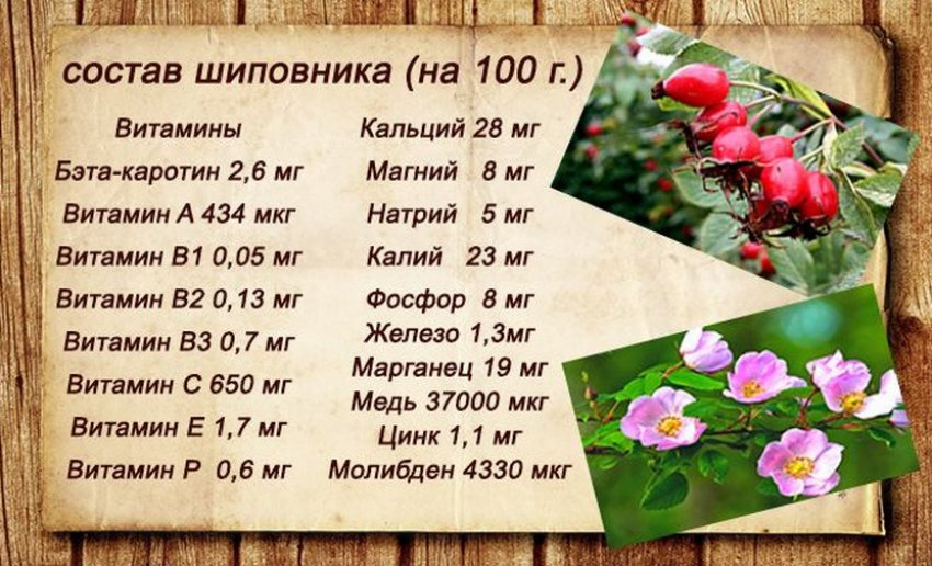 Шиповник в народной медицине. полезные свойства шиповника - огород, сад, балкон - медиаплатформа миртесен