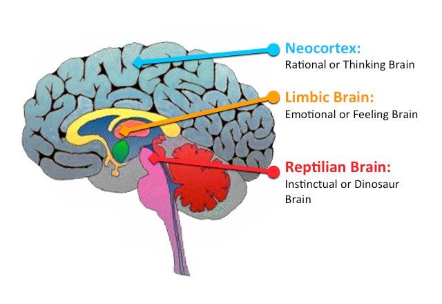 Неокортекс – рациональный мозг