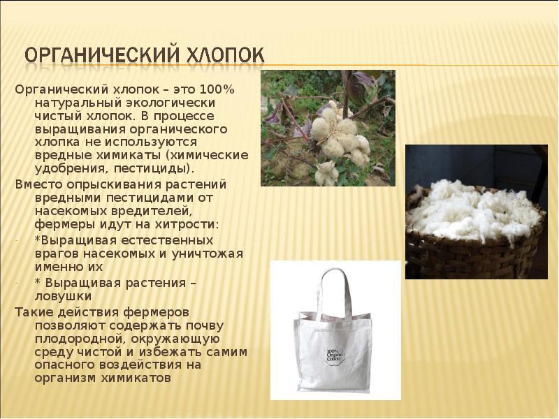 Органический хлопок: что это такое, особенности, где используют | натуральные | mattrasik.ru