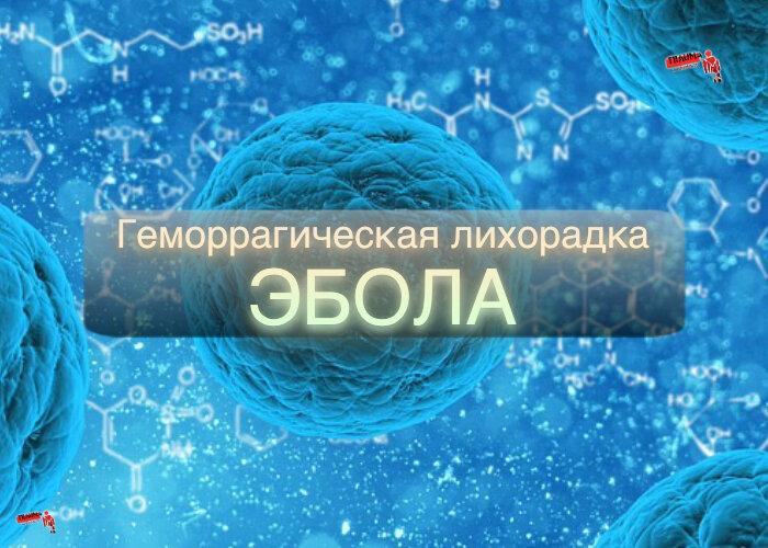 Хантавирус: последние новости, симптомы у человека, как появился
